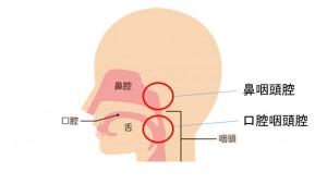 鼻咽腔など2